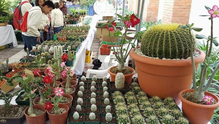 Feria de plantas exóticas en Guatemala | Julio 2018