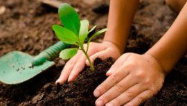 Buscan voluntarios para sembrar 10,000 árboles por el Lago de Amatitlán