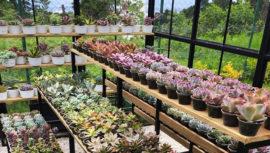 Dónde comprar suculentas en Guatemala