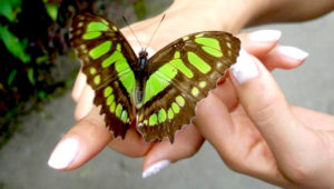 Taller interactivo dentro de un mariposario en Antigua | Julio 2018