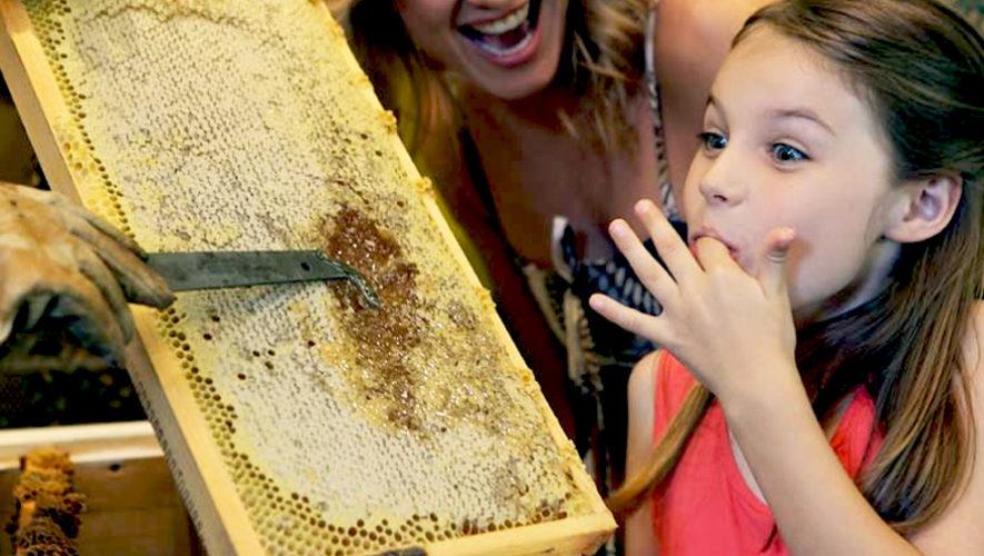 Taller sobre abejas y mieles artesanales en Antigua | Julio 2018