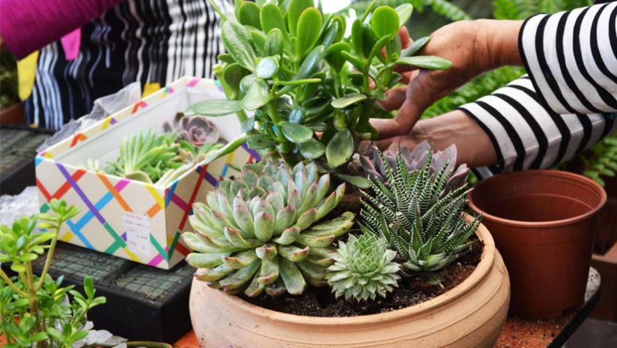 Vivero boutique el jard n d nde comprar suculentas en for El jardin vivero
