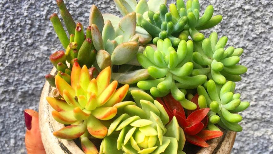 Bazar de cactus, suculentas y bonsáis | Agosto 2018
