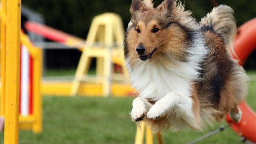 Exposición y competencia de perros en el Parque de la Industria | Agosto 2018