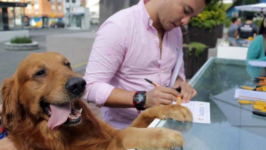 Feria de adopción de mascotas en Plaza España | Agosto 2018