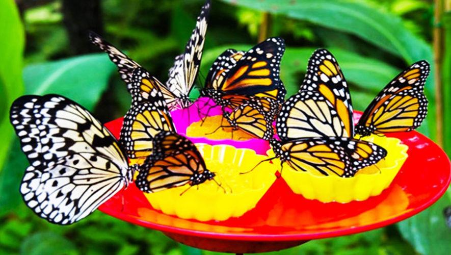 Taller para atraer y cuidar mariposas en tu jardín | Agosto 2018
