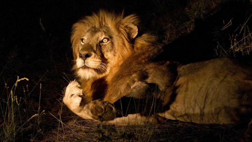 Paseo nocturno en el Zoológico Minerva, Xela | Septiembre 2018
