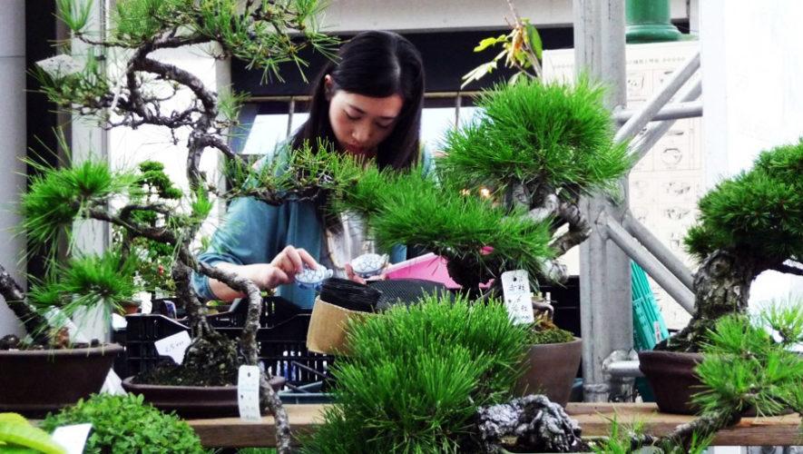 Exposición de bonsáis y plantas exóticas | Septiembre 2018