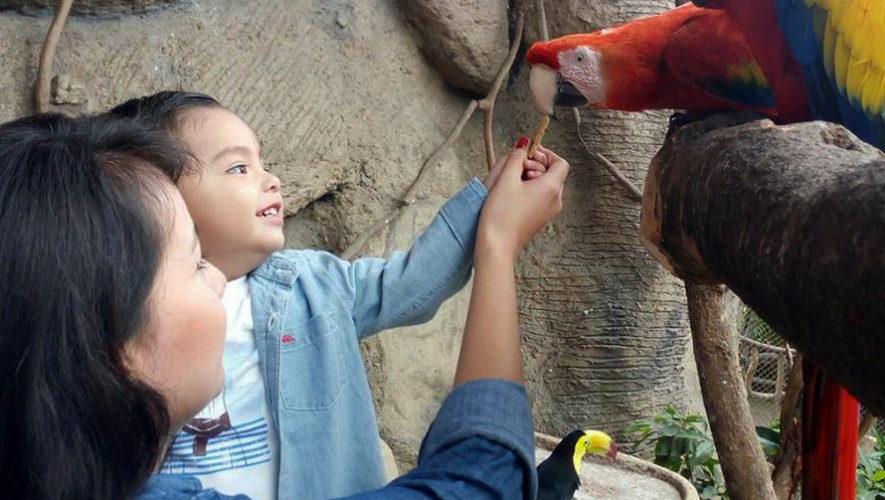 Celebración del Día del Niño en el Zoológico La Aurora | Septiembre 2018