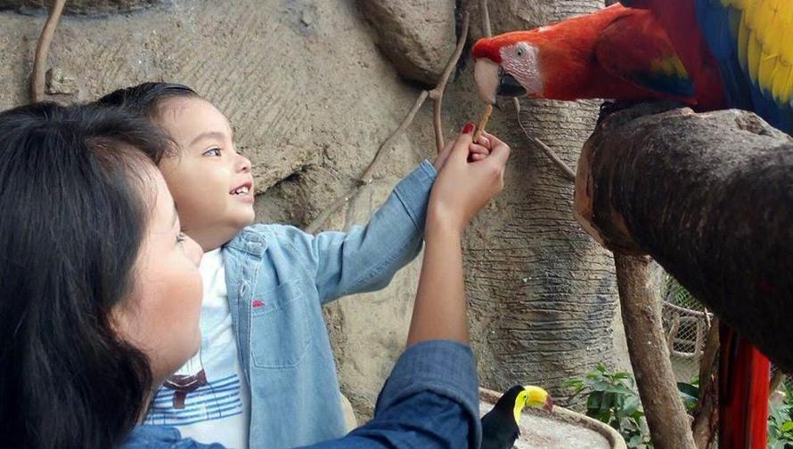 Celebración del Día del Niño en el Zoológico la Aurora