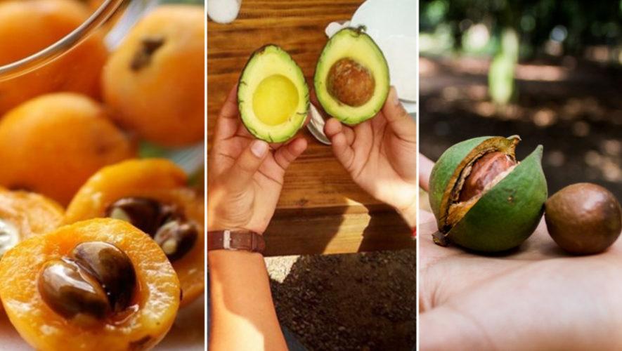 Tour de níspero, macadamia y aguacate en Antigua Guatemala | Septiembre 2018