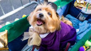 Concurso de disfraces de Halloween con mascotas | Octubre 2018