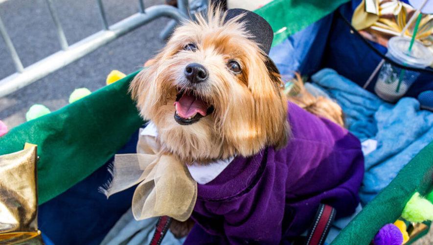 Concurso de disfraces de Halloween con mascotas   Octubre 2018