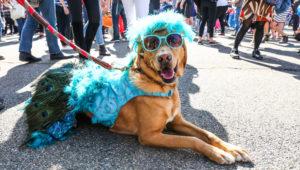Concurso de disfraces para mascotas en Miraflores | Octubre 2018