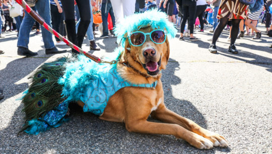 Concurso de disfraces para mascotas en Miraflores   Octubre 2018