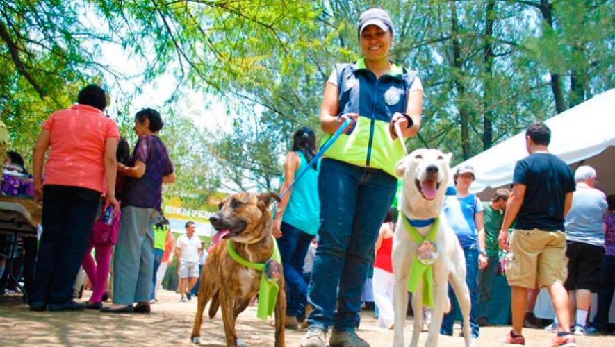 Domingo Verde: el festival ecológico gratuito en la Ciudad de Guatemala, 2018