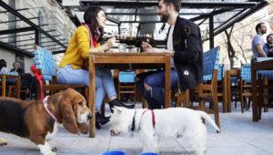 Taller de etiqueta canina en espacios pet friendly | Noviembre 2018