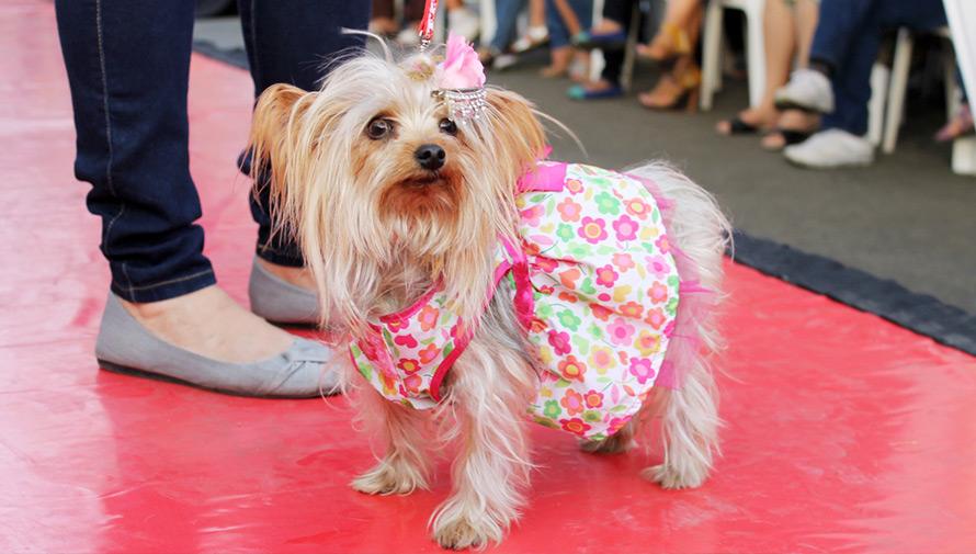 Fashion show de perritos en adopción en Guatemala