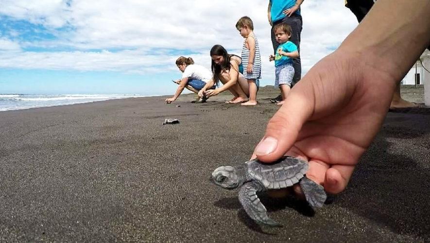 Liberación de tortugas y reforestación en Santa Rosa | Noviembre 2018