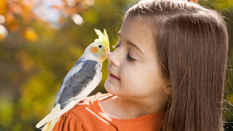 Taller infantil para aprender sobre aves en Guatemala | Octubre 2018