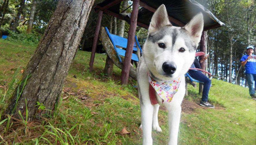 Viaje con tu mascota para hacer senderismo en Laguna Del Pino | Octubre 2018