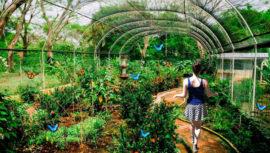 Increíbles mariposarios y aviarios que existen en Guatemala
