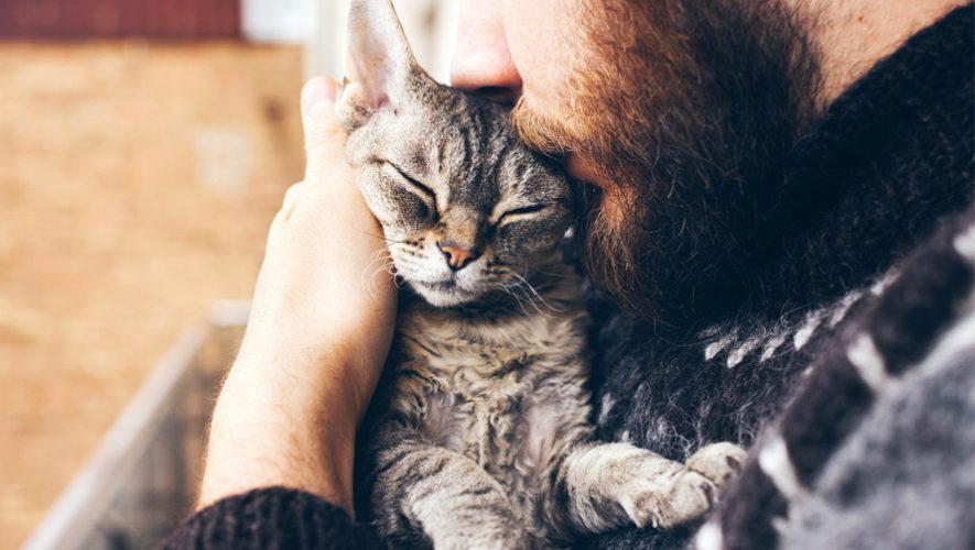 Convivencia para amantes de los gatos   Diciembre 2018