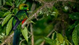 Datos curiosos de El Quetzal fueron destacados por National Geographic en Español
