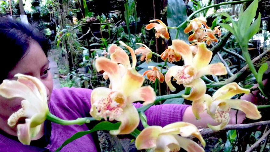 Exposición Internacional de Orquídeas en Cobán, Alta Verapaz | Noviembre - Diciembre 2018