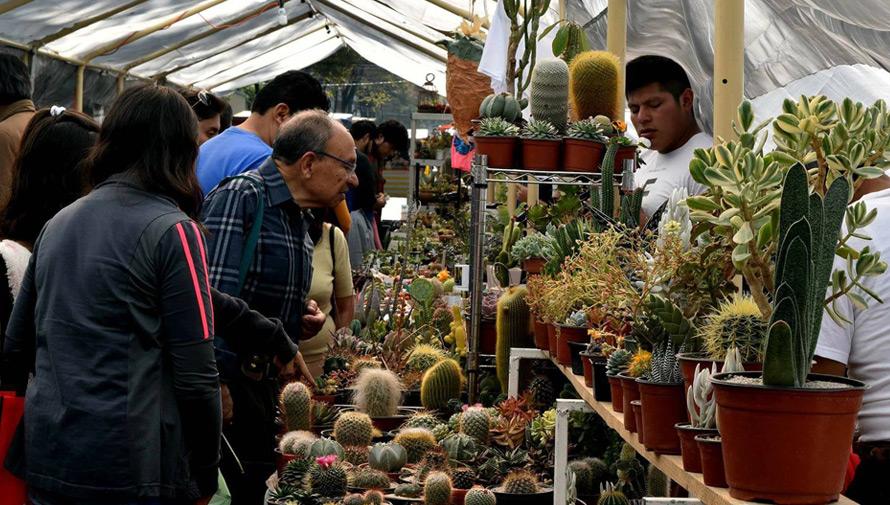 Festival navideño de suculentas, cactus y plantas exóticas