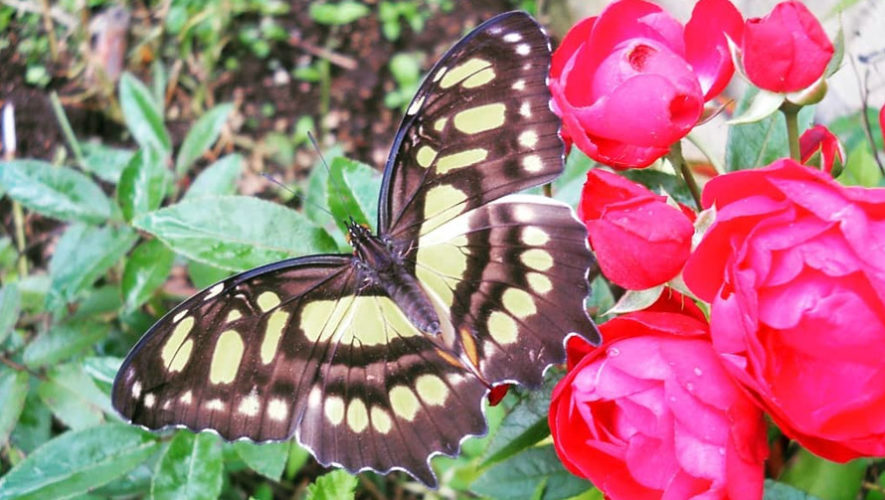 Taller gratuito sobre cultivo de plantas para atraer mariposas | Noviembre 2018