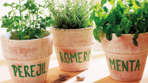 Taller para cultivar hierbas aromáticas | Noviembre 2018