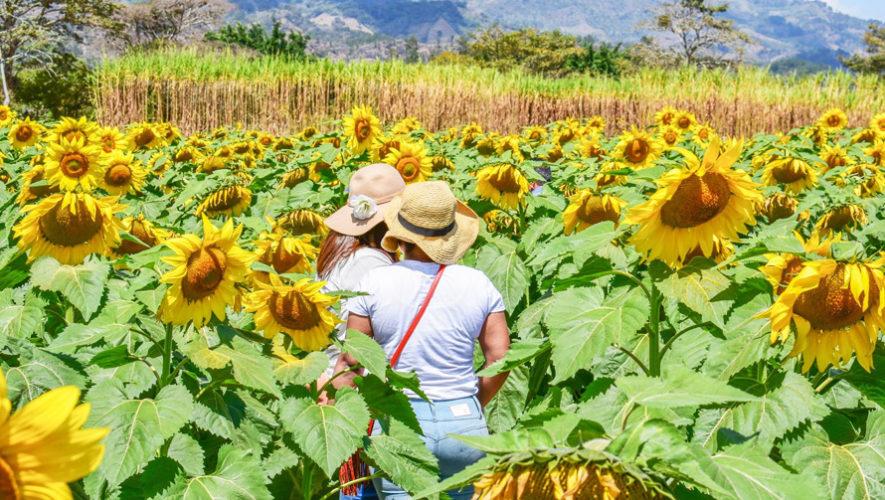 Viaje a la Finca de Girasoles en Esquipulas | Enero 2019