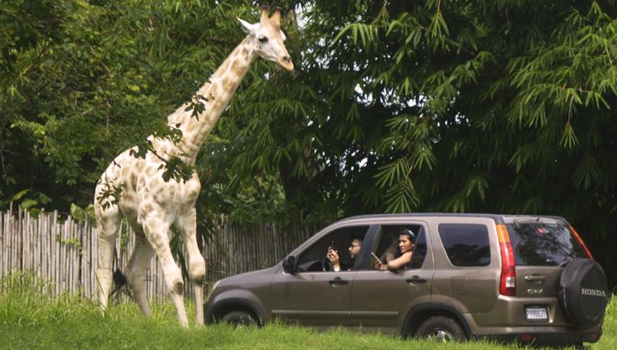 Viaje a Auto Safari Chapín
