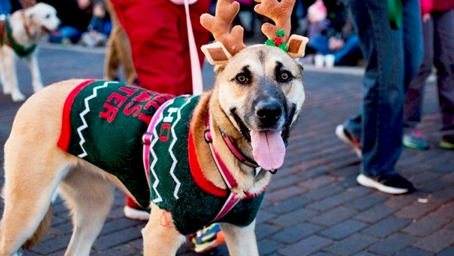 Concurso de disfraces navideños para mascotas | Diciembre 2018