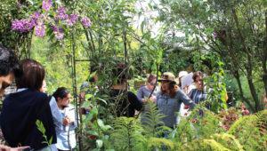 Curso de diseño y construcción de jardines | Enero 2019