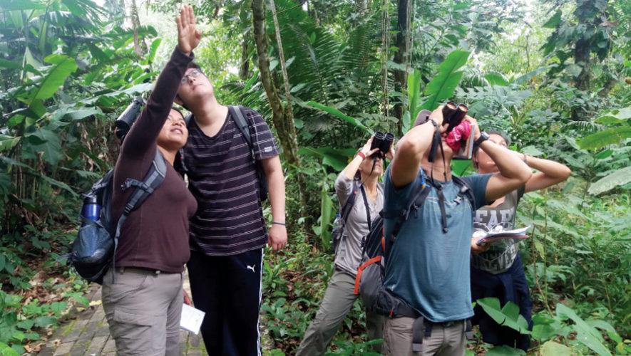 Viaje para observar aves en Escuintla | Diciembre 2018