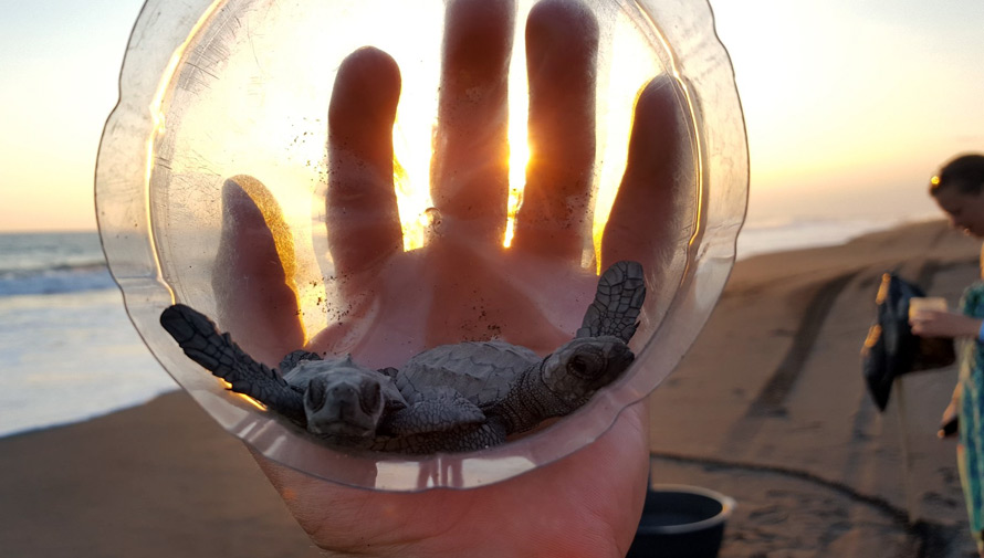 Viaje para visitar manglares y liberar tortugas en Monterrico