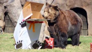 Celebración de Navidad para animales del Zoológico La Aurora | Diciembre 2018
