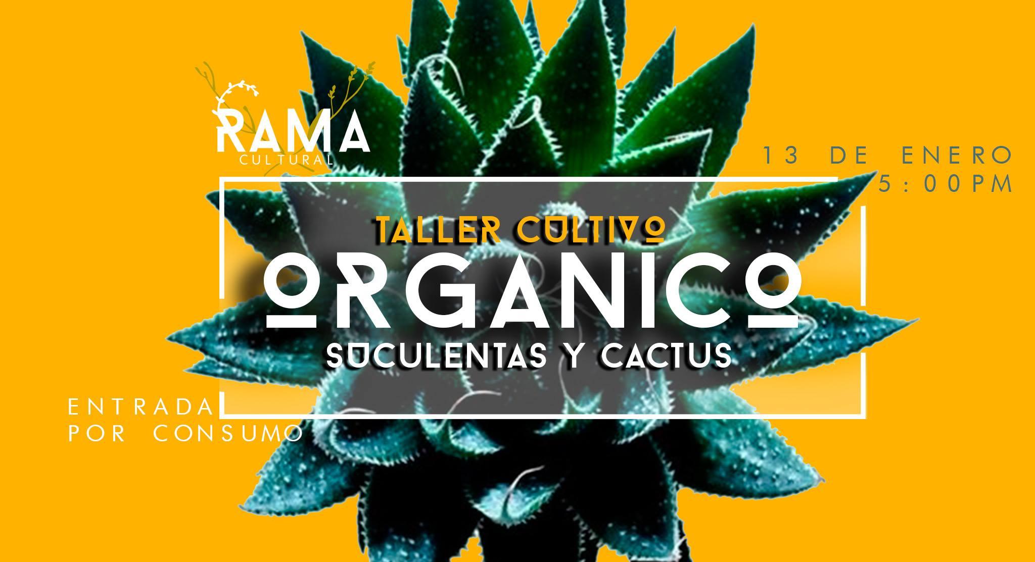 Taller de Suculentas y Cactus