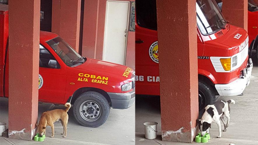 Bomberos Voluntarios de Cobán alimentan a varios perros sin hogar
