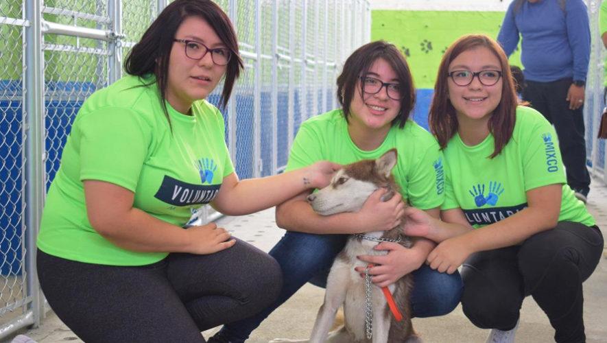 Buscan voluntarios para el Albergue Municipal de Mascotas en Mixco