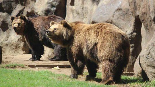 Disfruta de una noche mágica de osos en el Zoológico La Aurora
