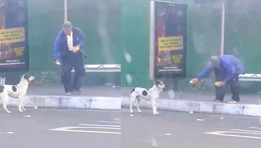 Guatemalteco le dio comida a un perro sin hogar en la Ciudad de Guatemala