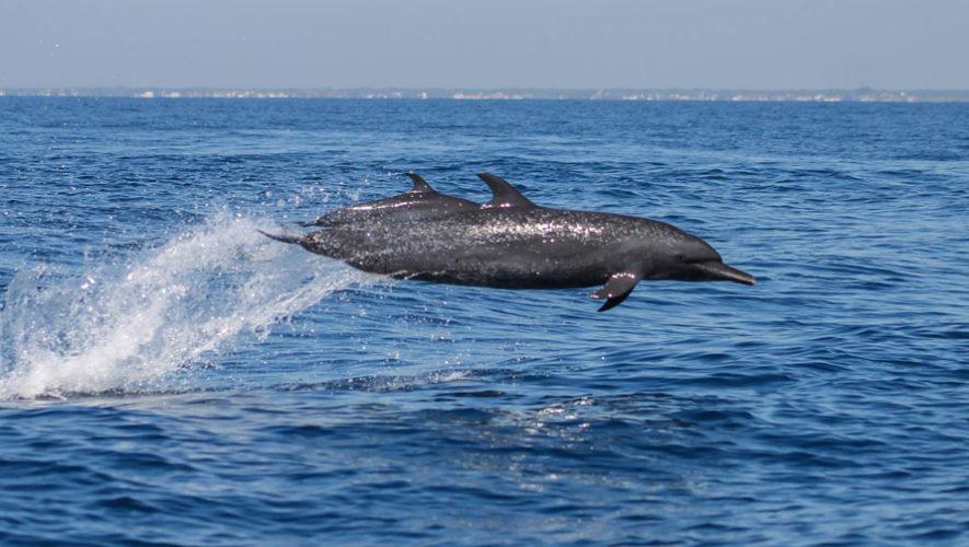 Viaje para ver delfines y ballenas en Santa Rosa   Enero 2018
