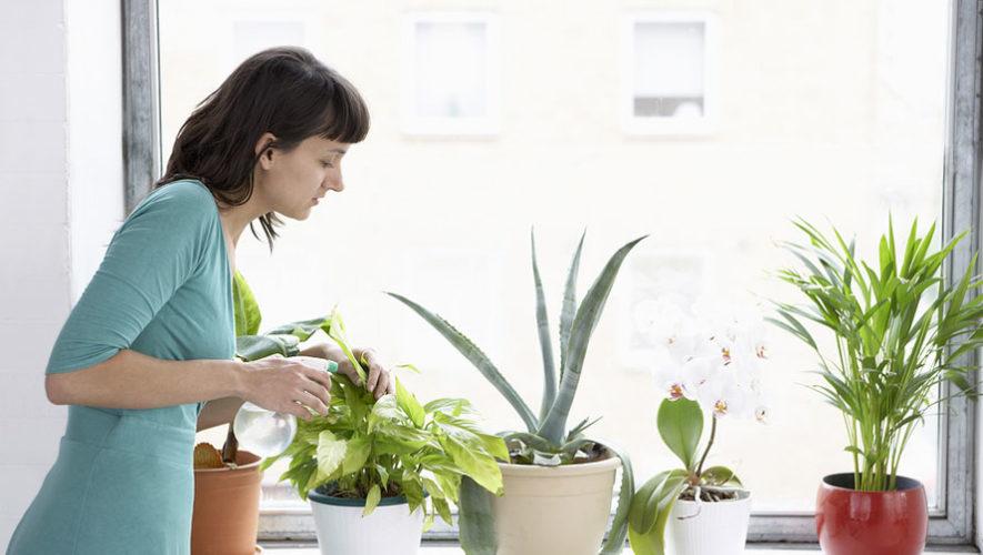 Taller para aprender a cuidar plantas | Enero 2018