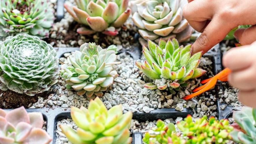 Festival de suculentas, cactus y plantas exóticas   Febrero 2018