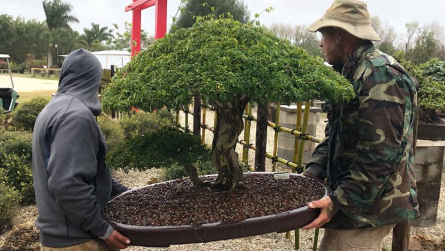 Inauguración de centro de jardinería en Guatemala | Enero 2018