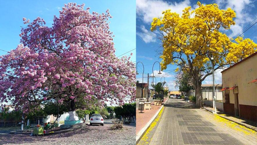 Los coloridos Árboles de Semana Santa en Guatemala