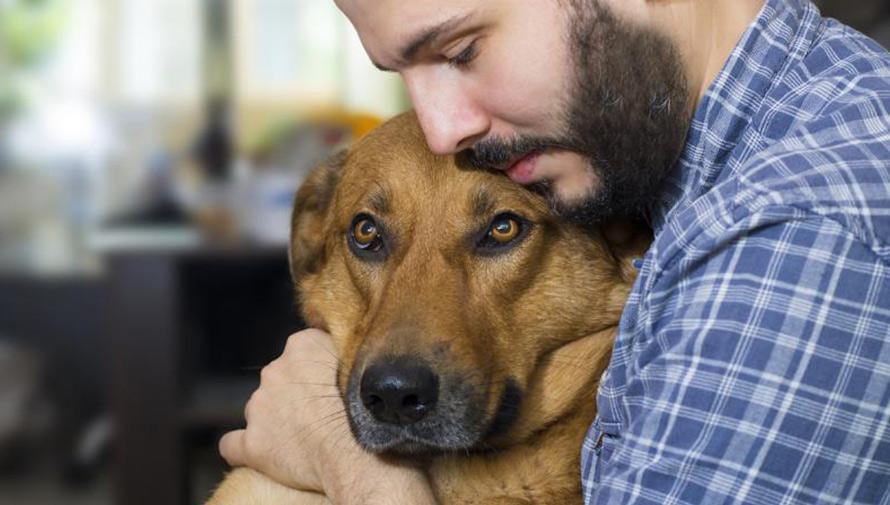 Realizarán concierto a cambio de comida para perros en Guatemala